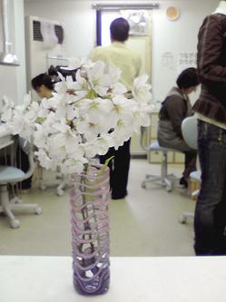 お教室にも桜♪