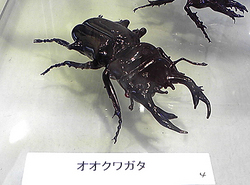 ガラスの昆虫!