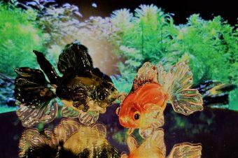 【バーナーブローで作る金魚のオーナメント】のデモンストレーション決定!